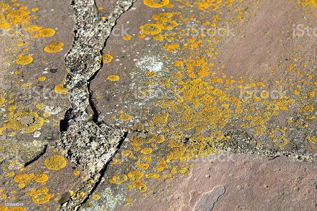 Lichen at a stone wall stock photo