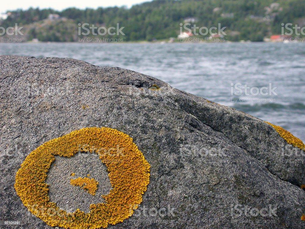 Lichen Circle royalty-free stock photo