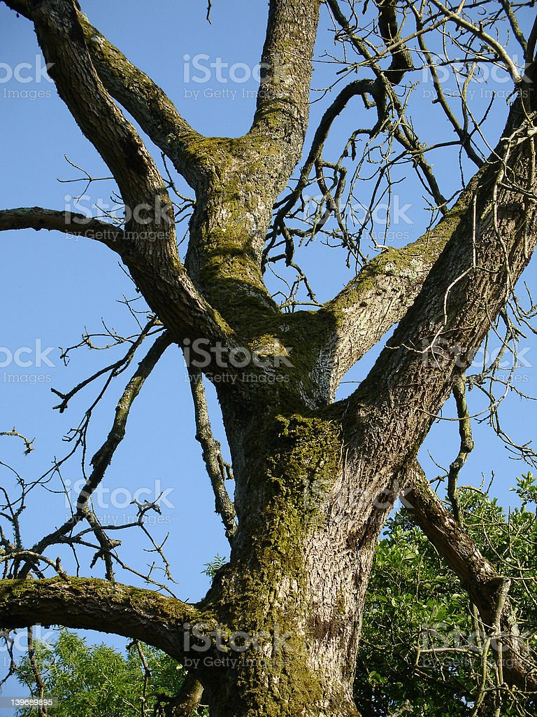 lichen covered tree trunk royalty-free stock photo