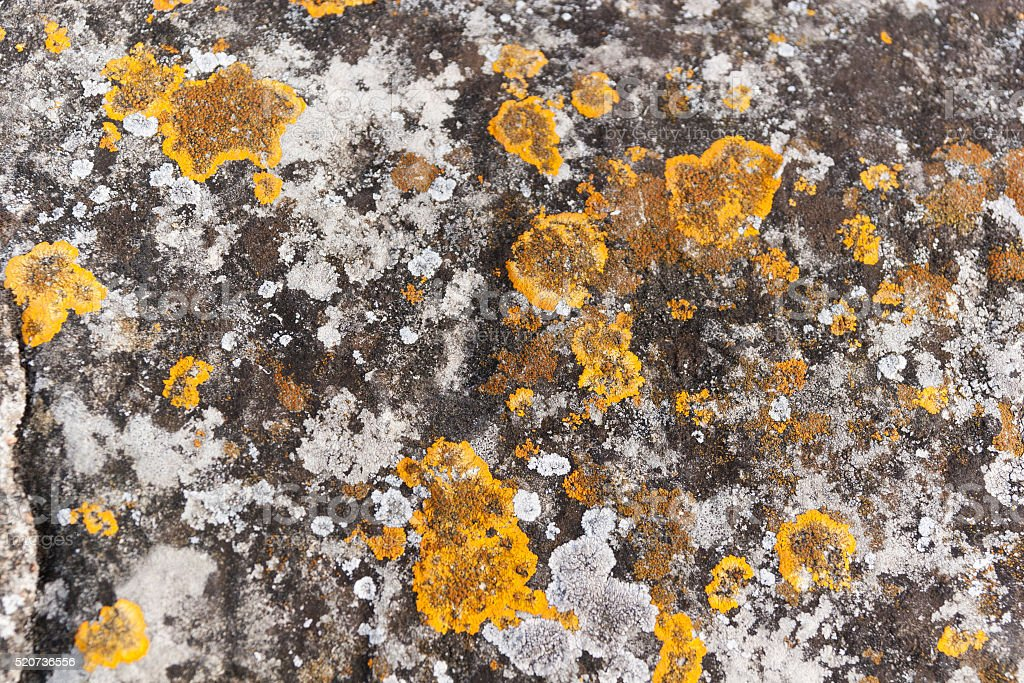 Lichen covered  wall stock photo