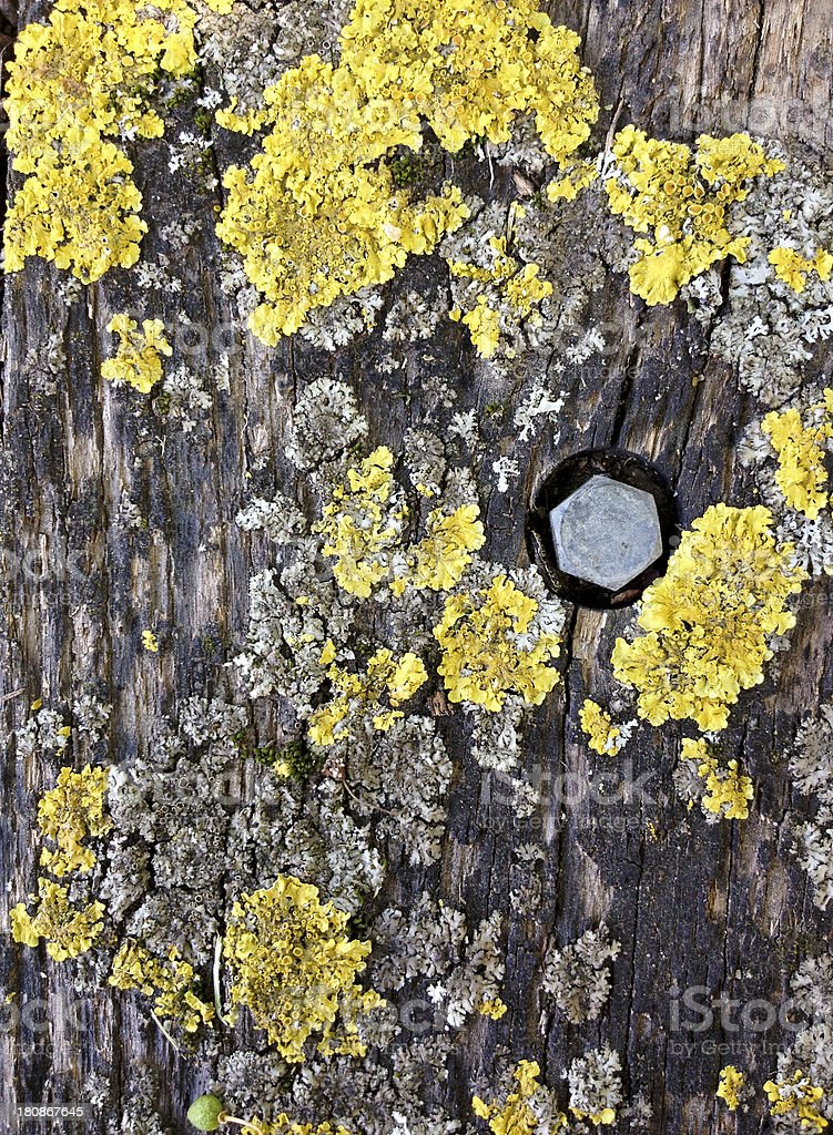 Lichen on a bench royalty-free stock photo