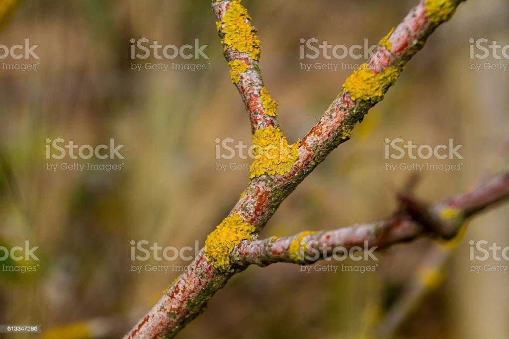 Lichen on a tree branch stock photo