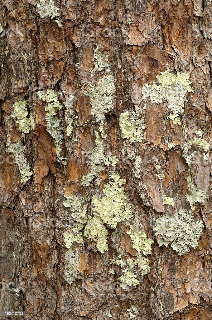 Lichen on a tree in Cade's Cove, Great Smoky Mountains stock photo