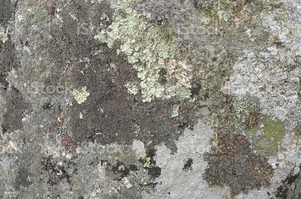 Lichen on Granite stock photo