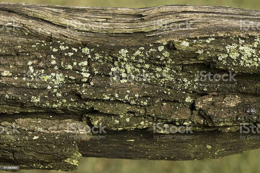 Lichen on old Wood II royalty-free stock photo