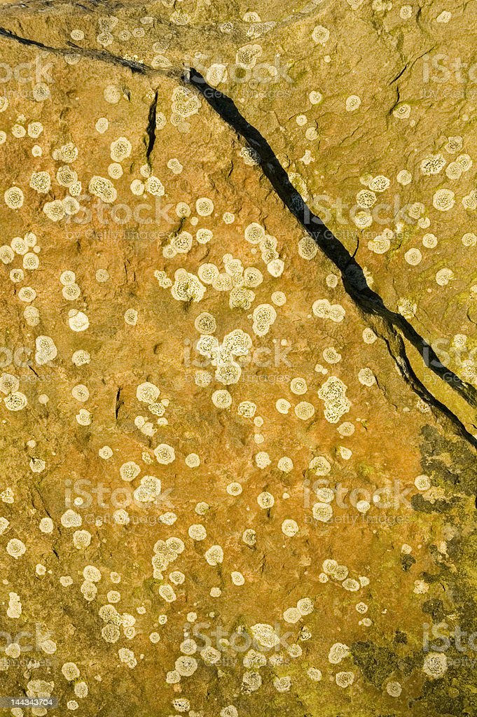 Lichen on rock royalty-free stock photo