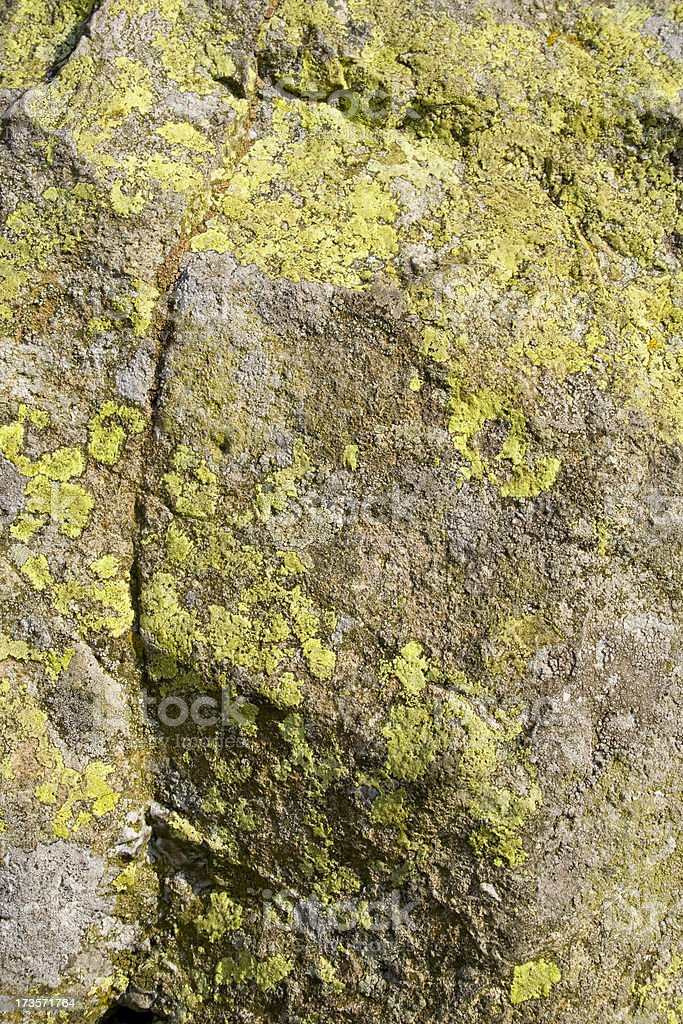 lichen on rock royalty-free stock photo