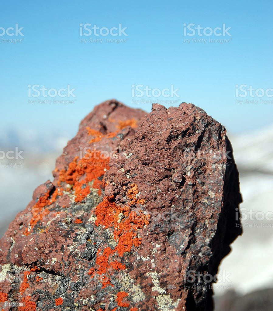Lichen on stone surface in mountains stock photo