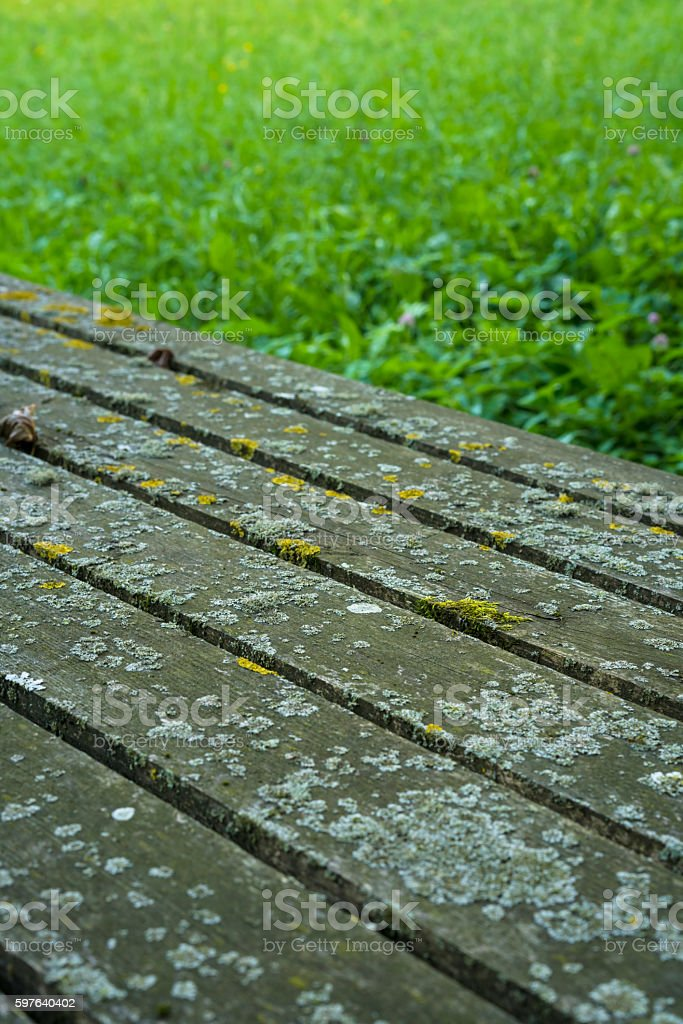 Lichen on vertical wood table for with grass in background stock photo
