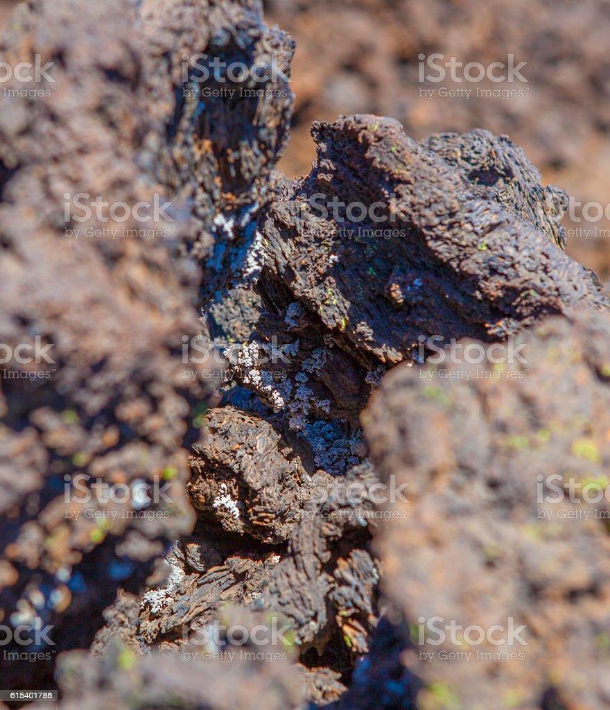 Lichen on volcanic Rock stock photo