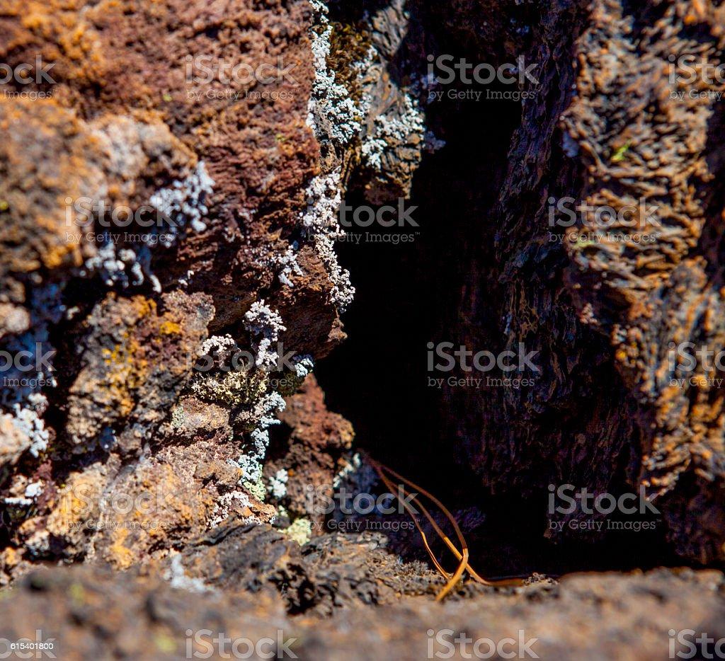 Lichen on volcanic Rock - Tenerife stock photo