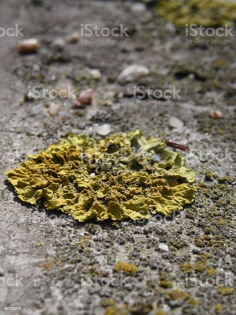 Lichen royalty-free stock photo