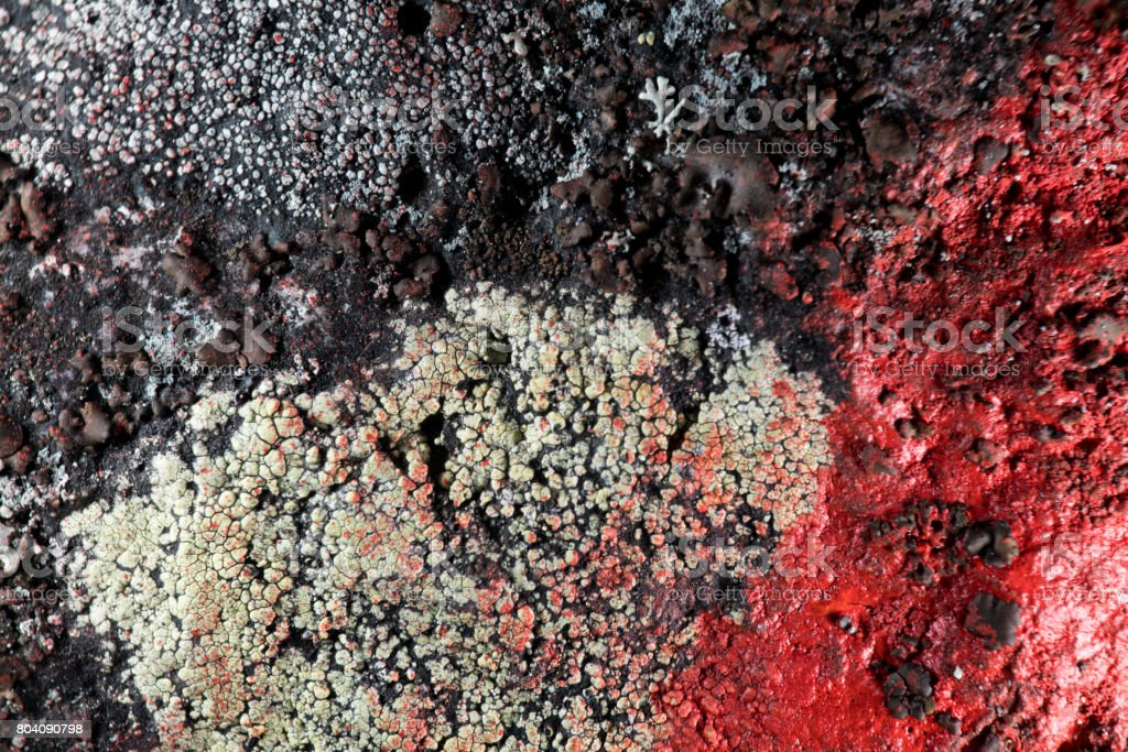 Lichen with paint on it stock photo