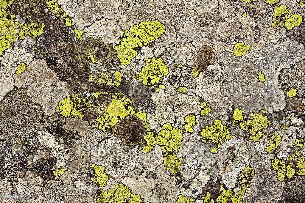 lichens as background royalty-free stock photo