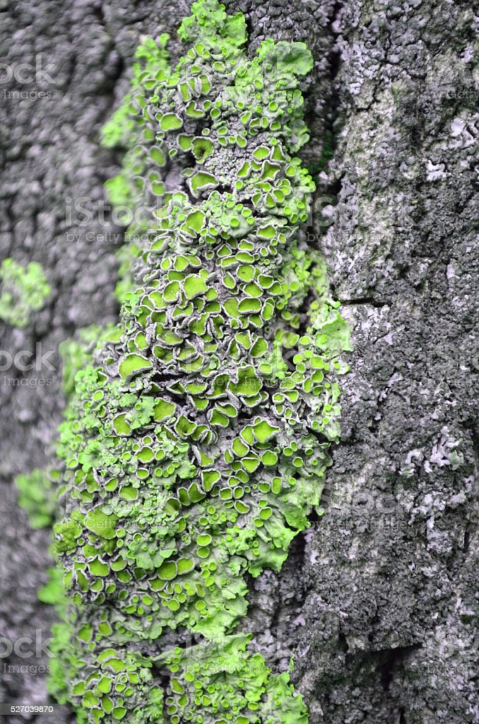 lichens on wood stock photo