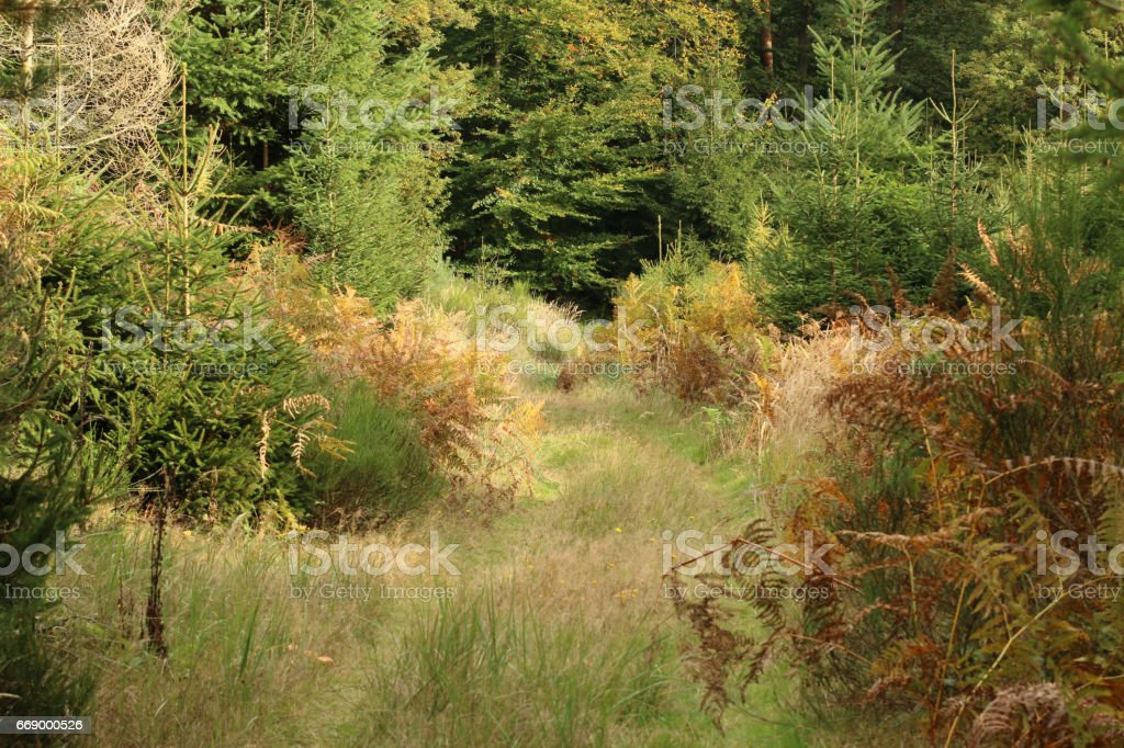 Lichtung im Mischwald stock photo