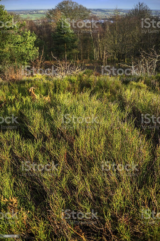 licky hills stock photo