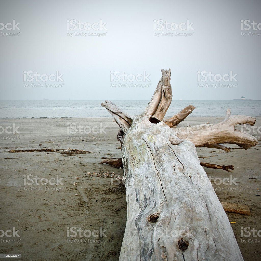 Lido Driftwood stock photo