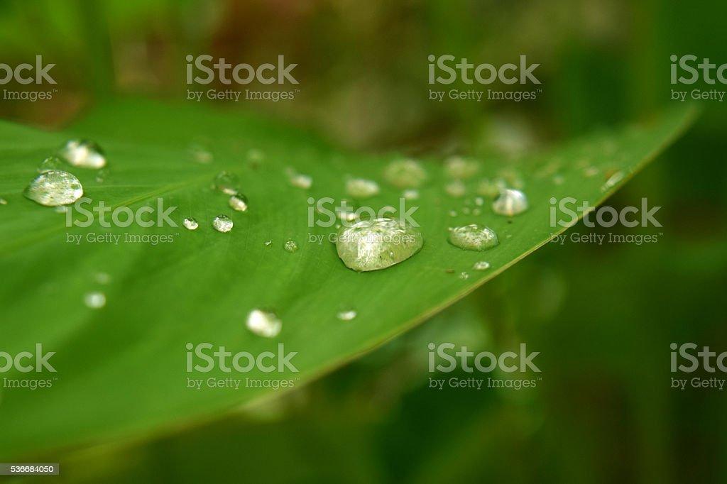 Life after rain stock photo