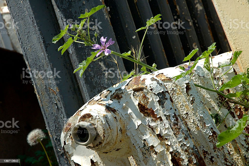 Life and Death Part 1 royalty-free stock photo