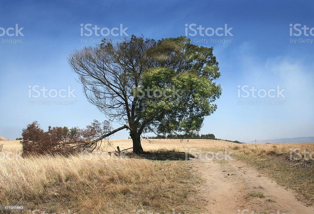 life and death royalty-free stock photo