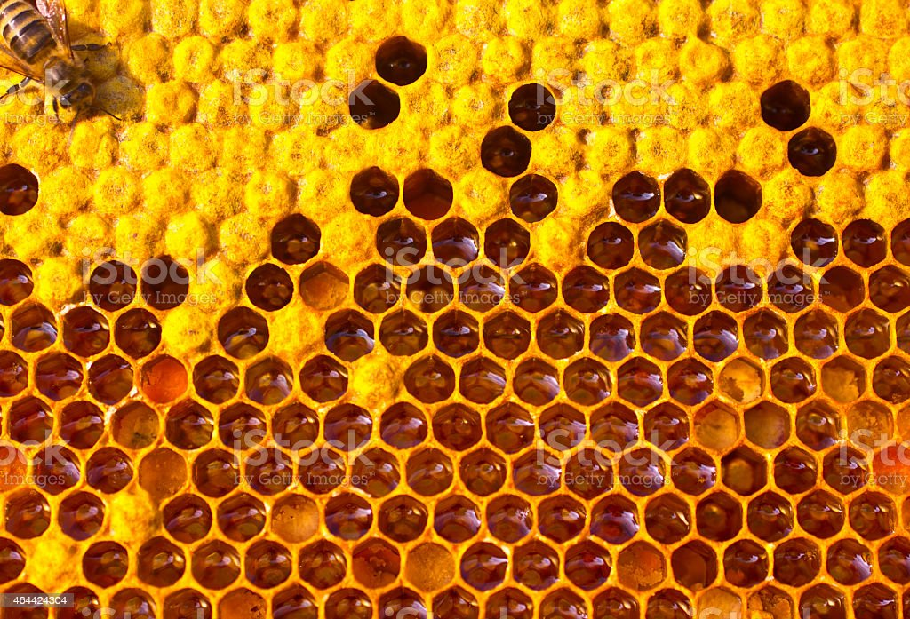Life and reproduction of bees stock photo