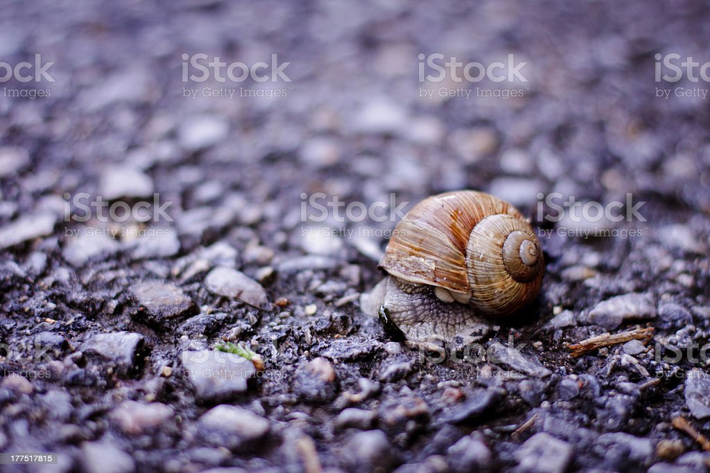 Life at a Snail's Pace stock photo
