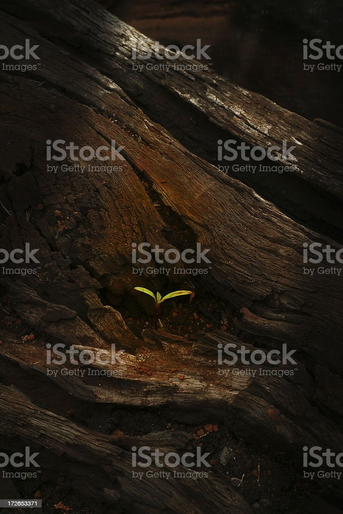 Life begins Anew stock photo