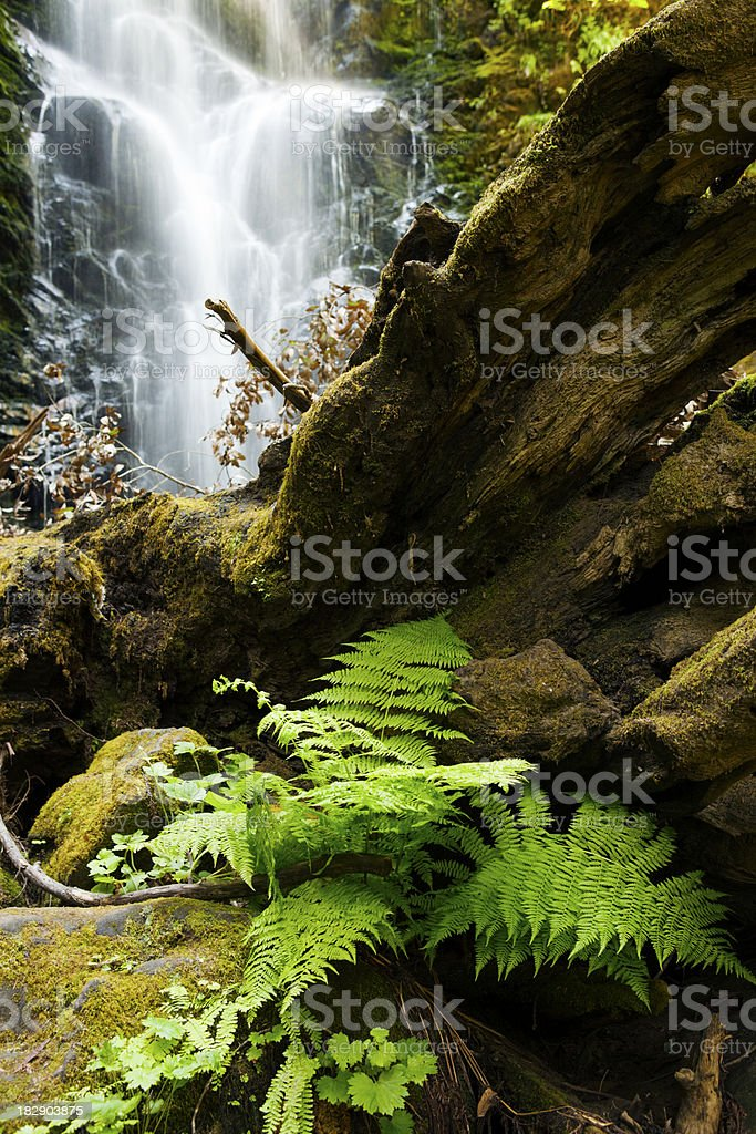 Life cycle: decaying tree, lush fern, and waterfall stock photo
