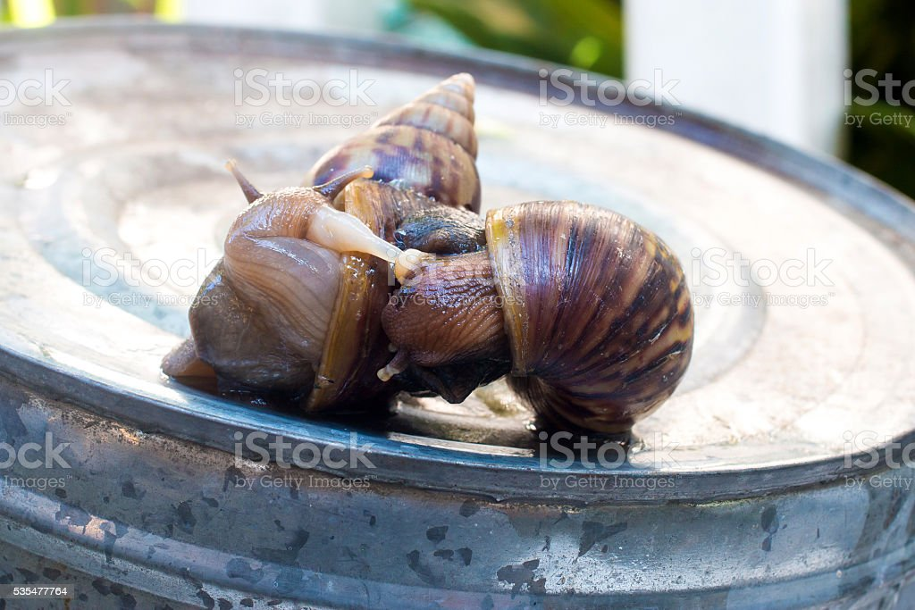 Life cycle of a snail stock photo