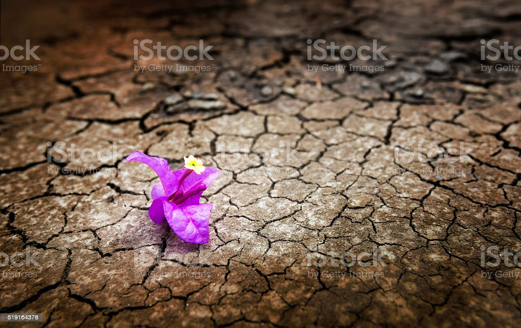 life find a way stock photo