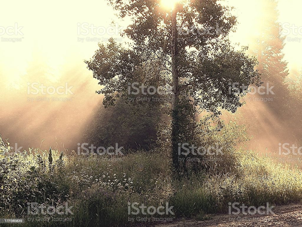 Life Giver Tree royalty-free stock photo
