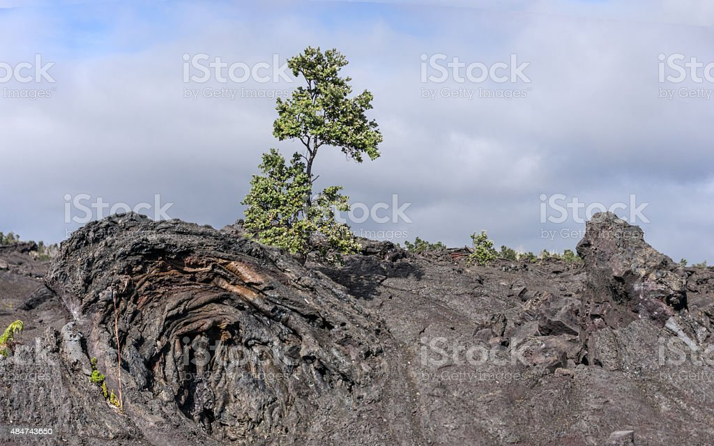 Life Grows From The Ashes stock photo