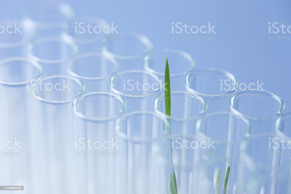 Life in a test tube stock photo