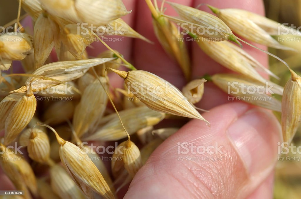 Life in the hand ! royalty-free stock photo