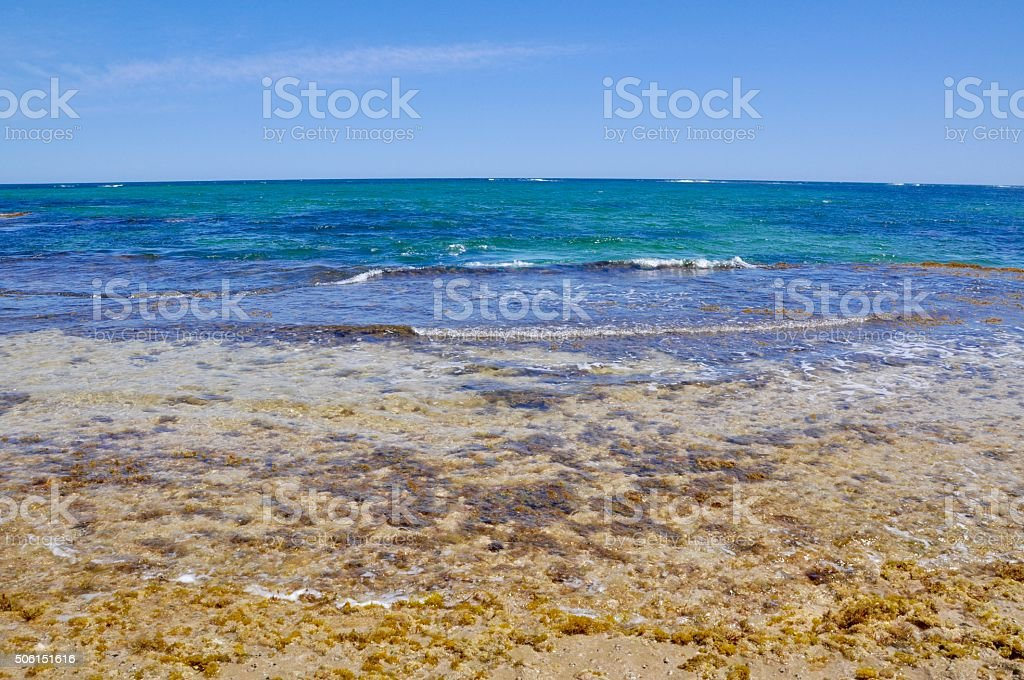 Life in the Indian Ocean Seascape stock photo