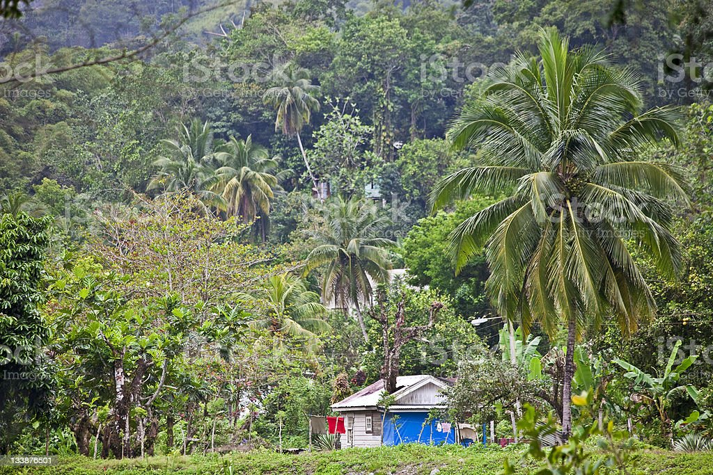 life in the jungle stock photo