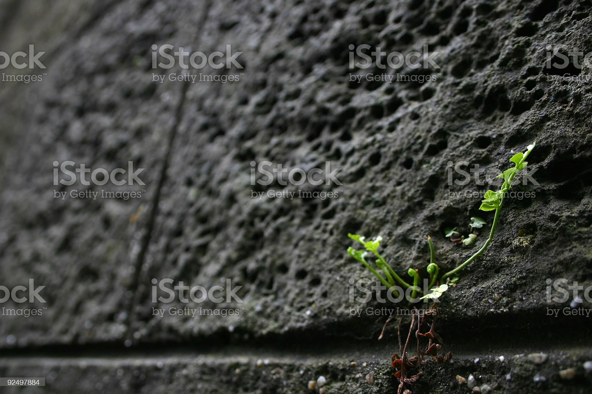 life is a struggle royalty-free stock photo