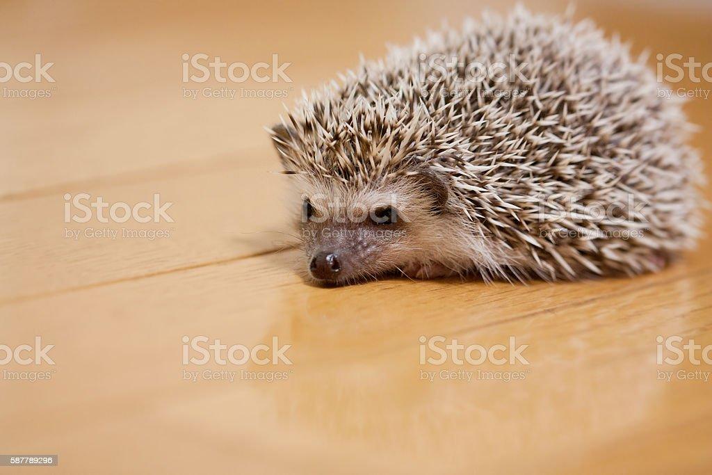Life of hedgehog stock photo