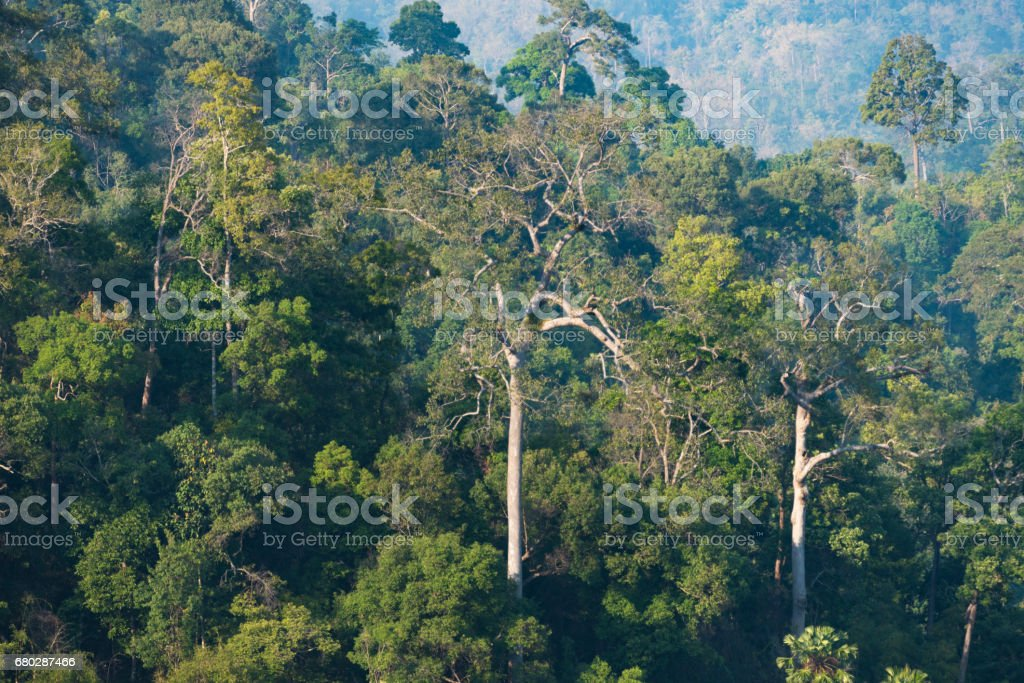 Life of tropical wild forest, Khao National Park, Thailand