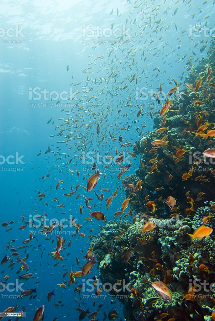 Life on the coral reef royalty-free stock photo