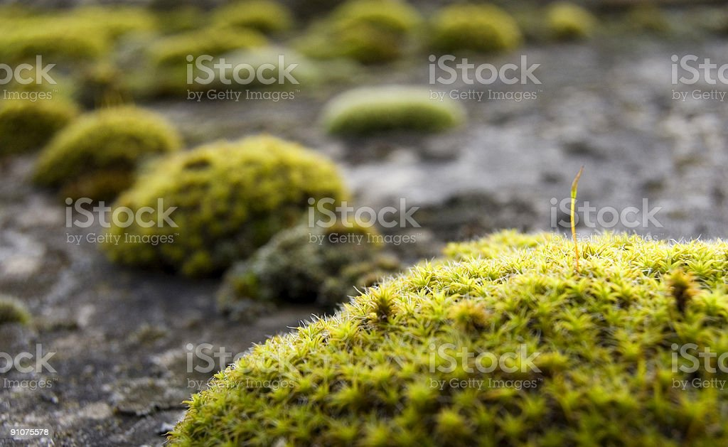 Life on the roof royalty-free stock photo