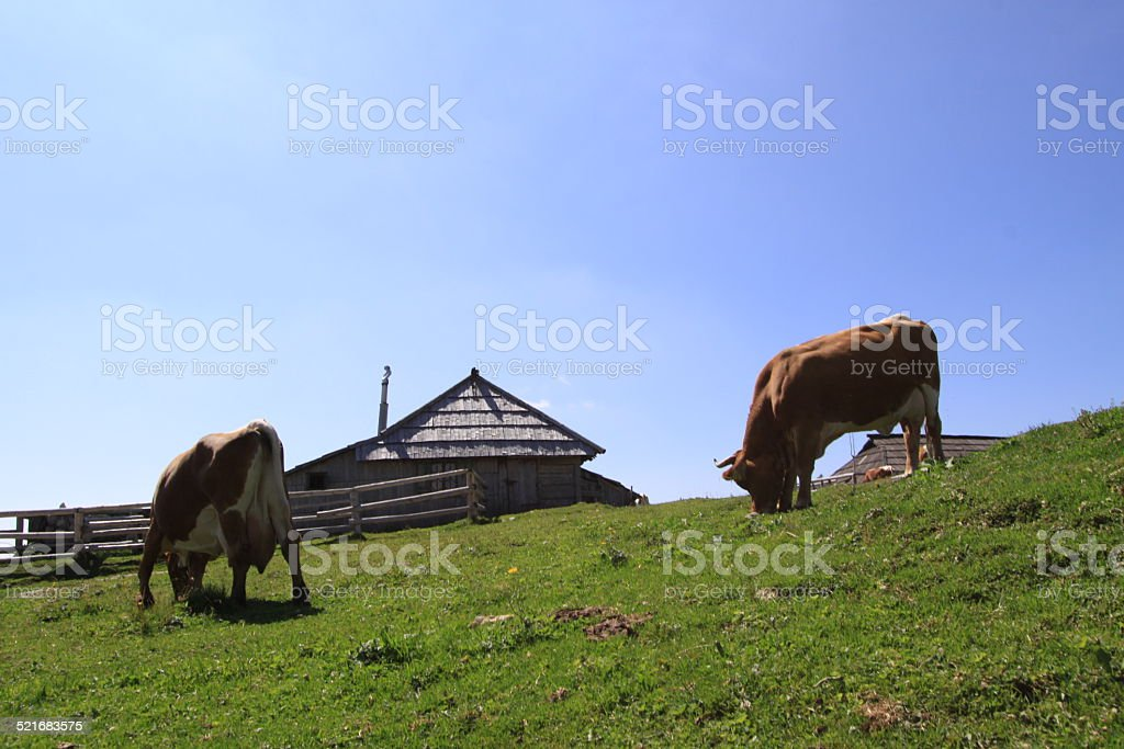Life on Velika Planina stock photo