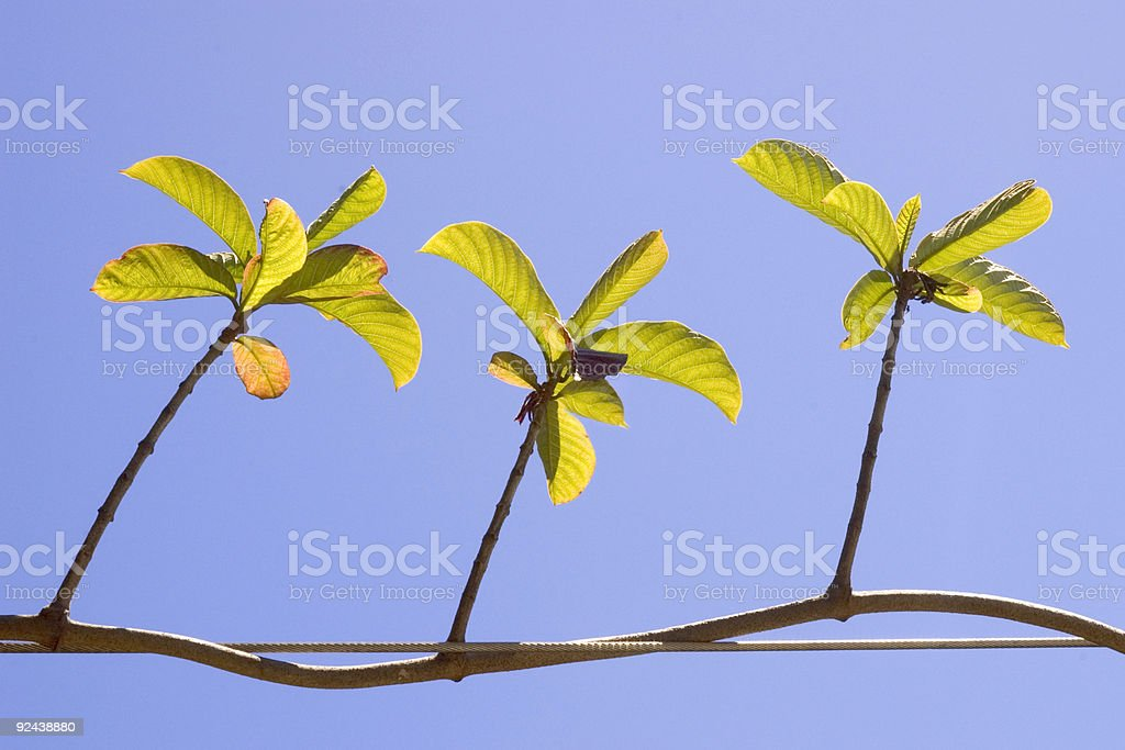 Life - Spring Green royalty-free stock photo