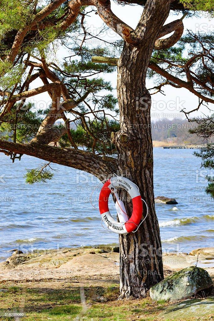 Lifebuoy on tree stock photo