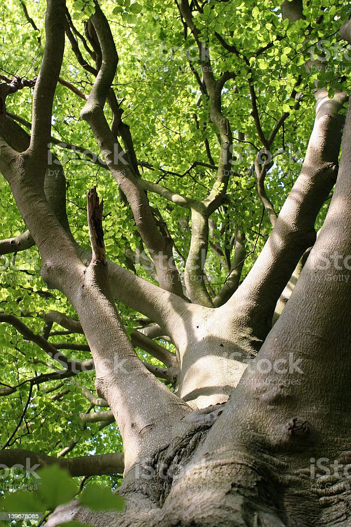 Life's a Beech royalty-free stock photo
