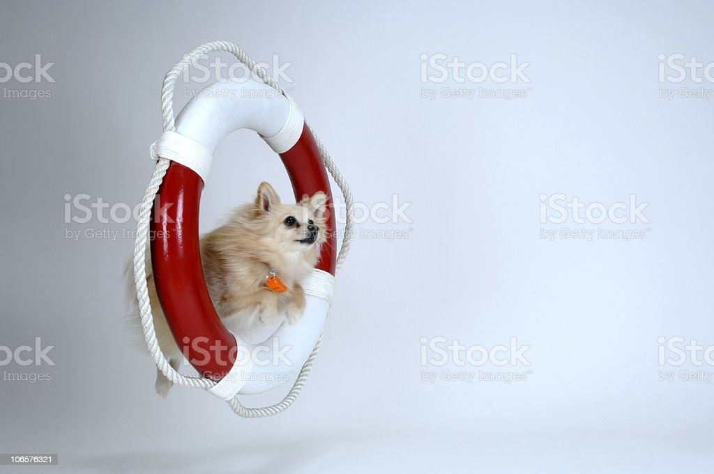 Lifesaving Pom stock photo