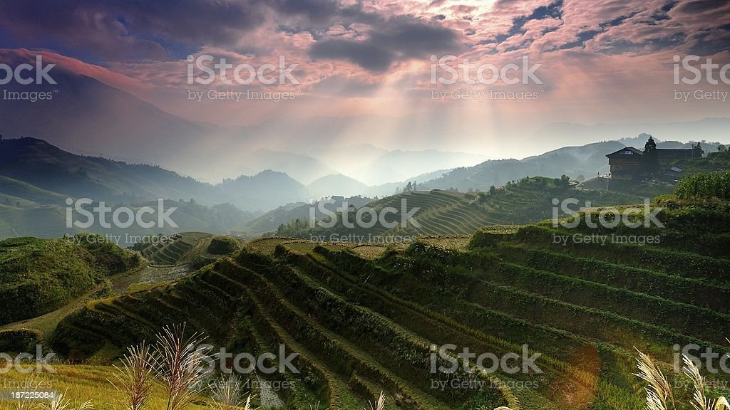 light and shadow of terraced fields in the morning 04 stock photo