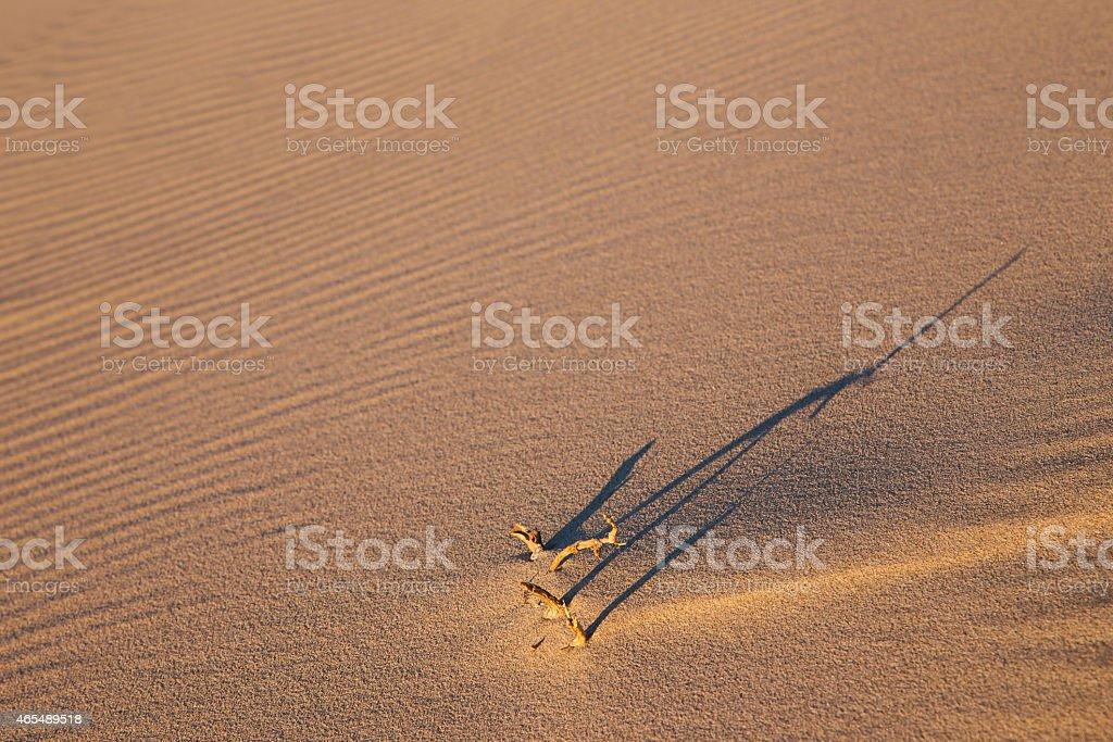 Свет и тень на Долина Смерти Стоковые фото Стоковая фотография