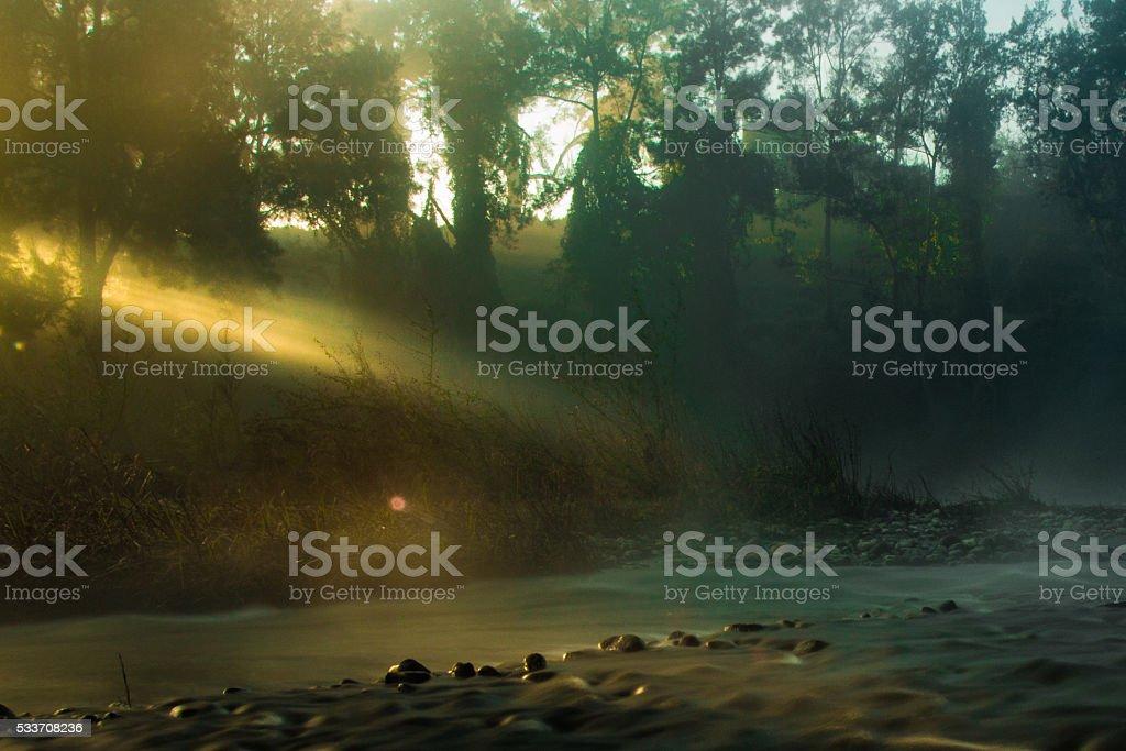 Light beam through the trees stock photo